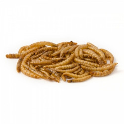 Dried Mealworms Curry
