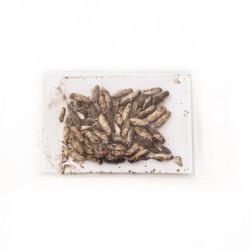 Dried Crickets Arfican Rub